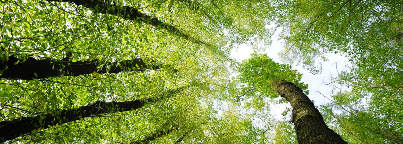 Slider Antolini scritta alberi